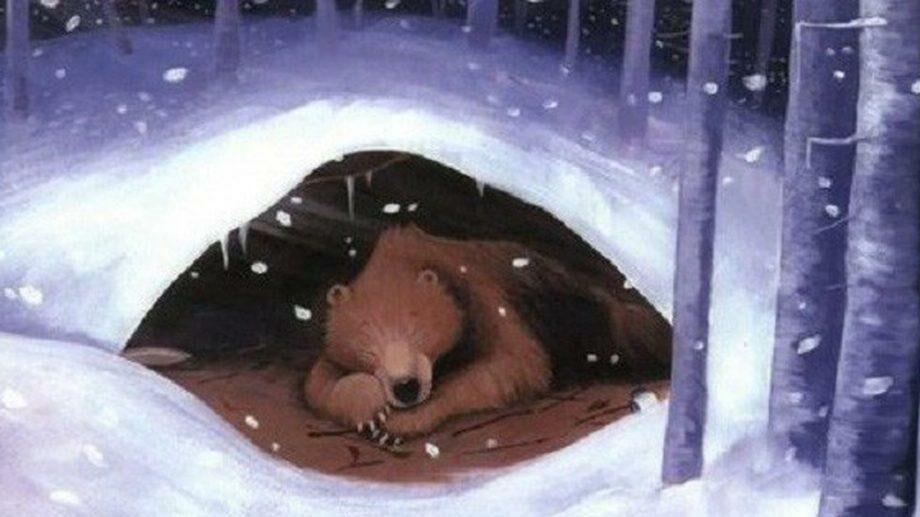 «Мама так тобой гордится». Канадский медведь вышел из спячки и выкопал себя из снега