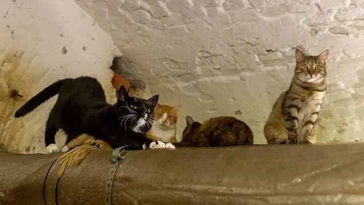 (видео) «Эрмитажные коты передают всем привет имур-мур»: сняли видео ожизни музейных котов вусловиях изоляции