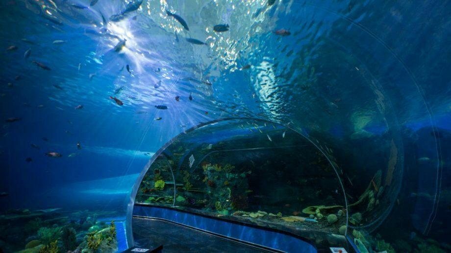 (видео) Экскурсии для животных: морской лев по кличке Бирри-младший прогулялся по пустому океанариуму