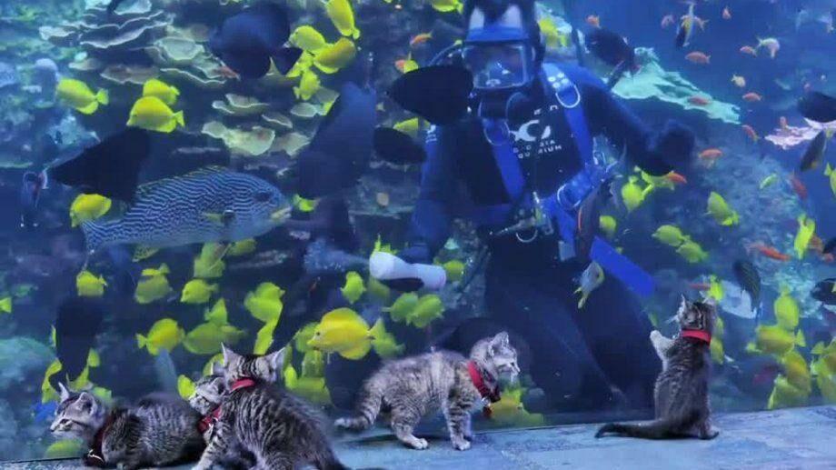 (видео) Котятя, ваш выход! Океанариум Джорджии устроил экскурсию для пушистиков