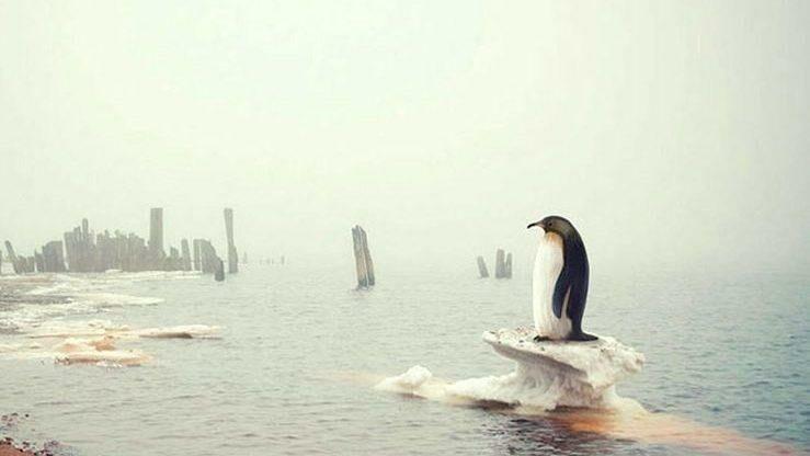 Креативный конкурс о климатических изменениях. Работы принимаются до 15 июня