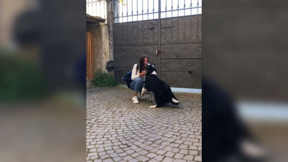 (видео) Это так трогательно! Как встречает пес девушку своего хозяина после 56 дней карантина