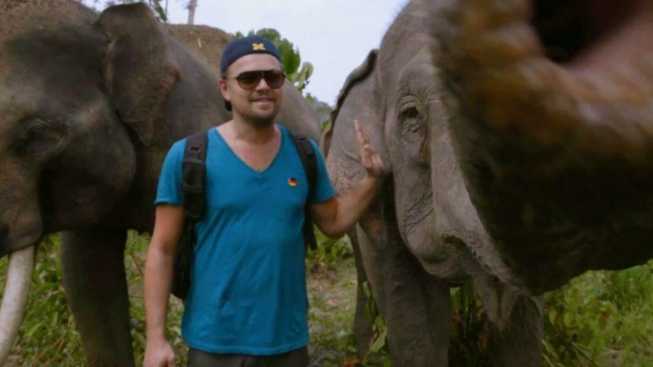 Киноадаптация документального фильма «Вирунга»: Леонардо ДиКаприо спродюсирует для Netflix картину о дикой природе