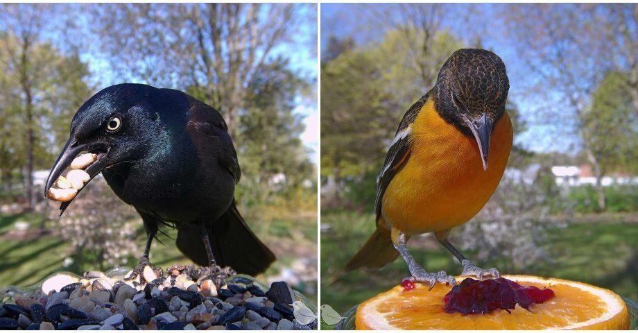 (фото) Птичий #foodporn. В США женщина установила камеру на кормушку и теперь каждый день там фотографируются сотни птиц