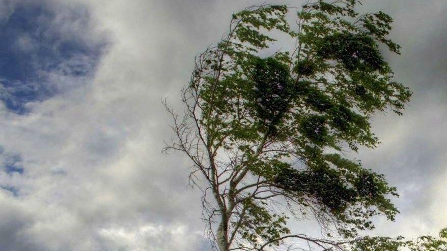 Синоптики объявили в Молдове желтый код метеоопасности из-за сильного ветра