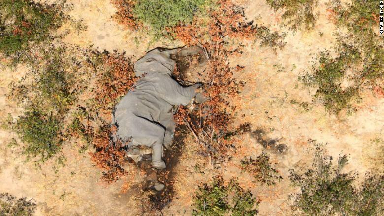 Два месяца назад в Ботсване начали массово гибнуть слоны. На сегодняшний день умерло около 350 особей