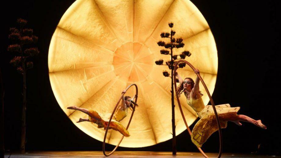 Cirque du Soleil объявил о банкротстве: компания вынуждена уволить несколько тысяч сотрудников