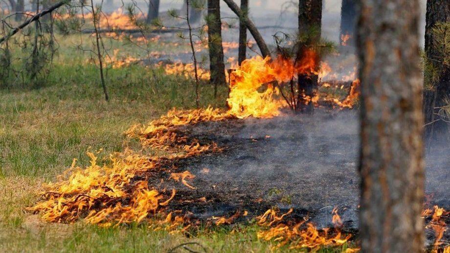 Жаркая погода и пожароопасность. Синоптики вновь объявили желтый код метеоопасности